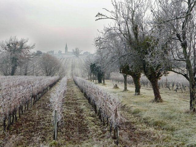 Clima e a temperatura em Bordéus