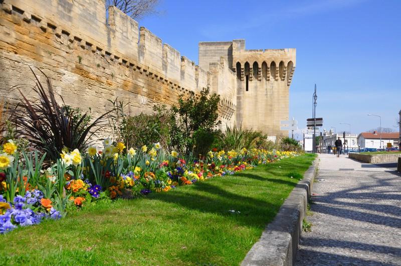 Flores em Avignon